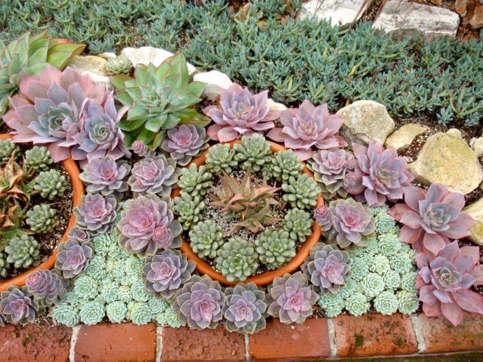 plante exterieur en pot, pots de fleur avec mini plante grasse, massid de succulentes, pierres