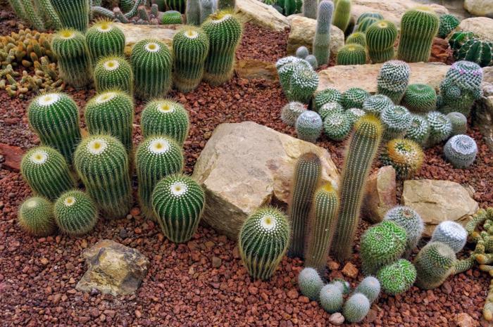 jardin désertique avec cactus exterieur, pierres, cailloux, jardin paysager, plantes succulentes