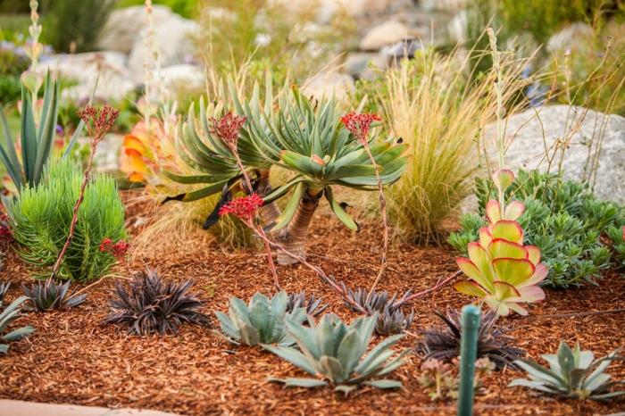 plantes succulentes d'extérieur, paillage, plante grasse fleurie, pierres, planta grasse a fleur