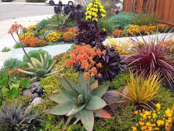 jardin avec plantes grasses, agavacées, fleurs et plantes de rocaille pour le jardin devant la maison