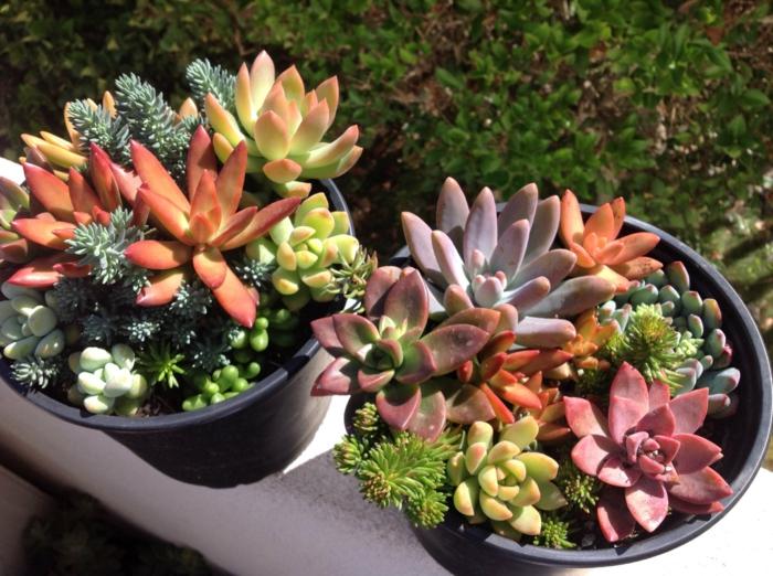 pots de fleur avec succulentes miniatures, idées jardinage avec plante succulente espèces représentatives