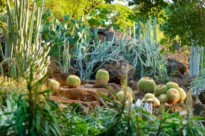 cactus boules, sol rocheux, cactus géants, plantes de rocaille, grand jardin botanique