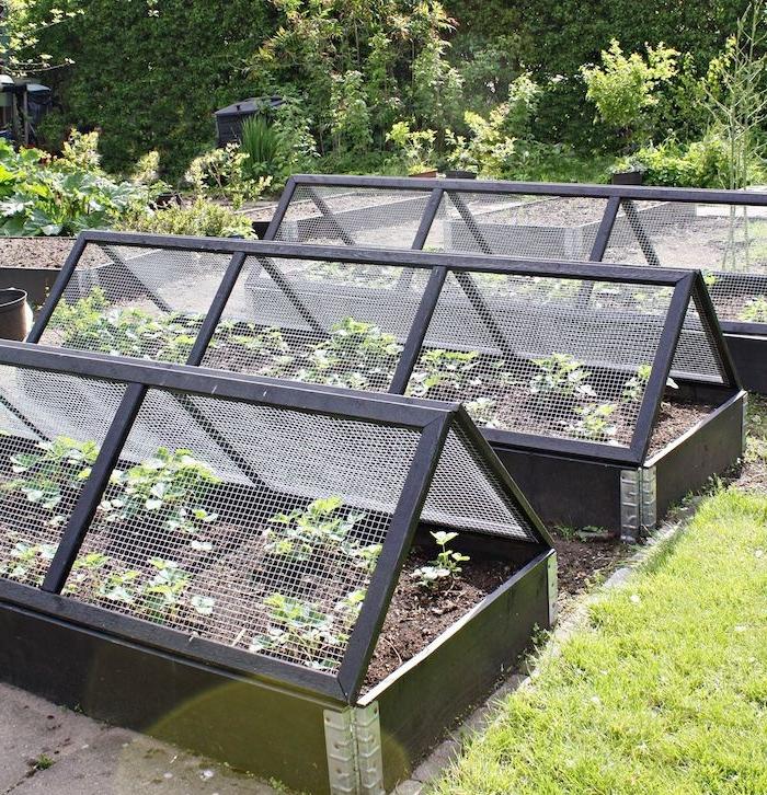 carre potager en bois, lits pour légumes entourés de planches de bois et de légumes plantés à l horziontale