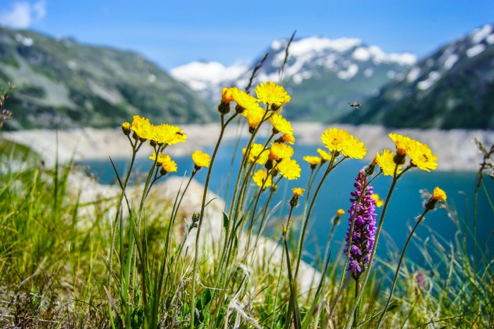 paysage paradisiaque, fleurs alpins, lac euax eaux purs et calmes, destination de vacances
