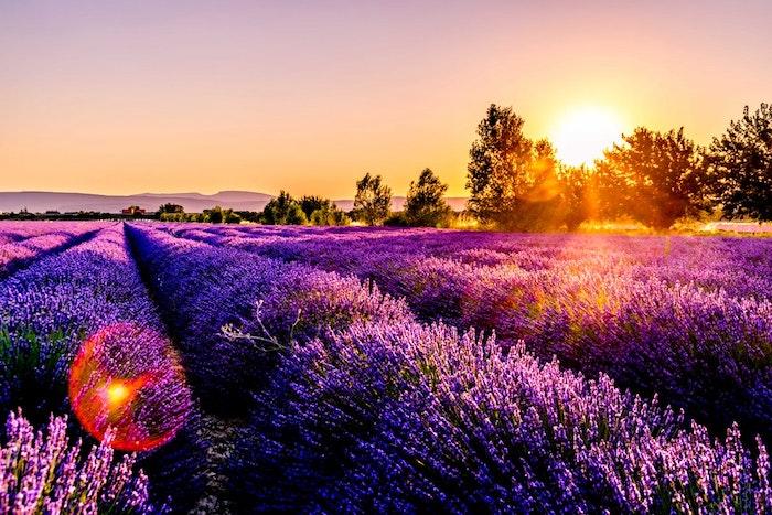 Lavande en provance, france, le plus beau pays du monde, france paysage, le pays le plus beau au coucher de soleil
