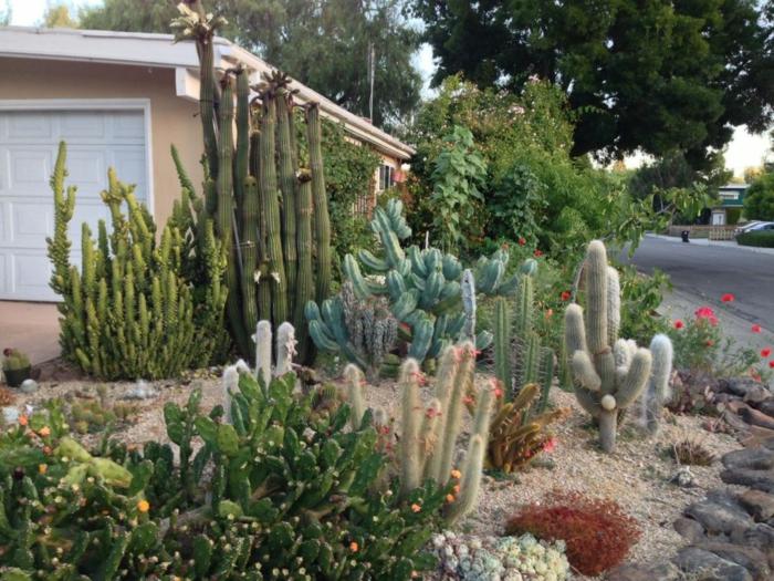 cactus raquette devant la maison, cactus géant, plante grasse fleurie, chemin, cailloux