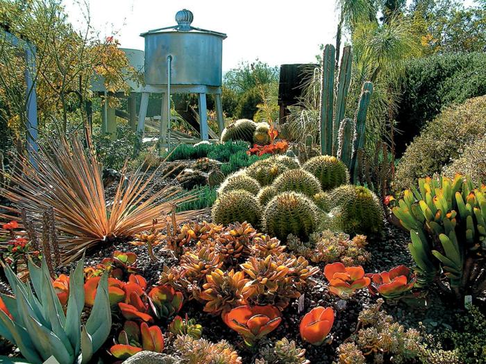 jardin botanique avec succulentes, cactus boule, plantes grasses fleuries, cactées raquette
