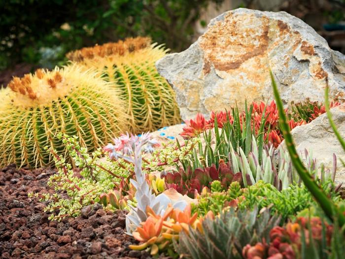cactée épineuse, grandes pierres, aloe, cailloux, espèces de plantes grasses exterieur