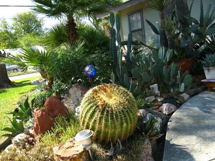 géant cactus boule, jardin, plante cactus, plantes de rocaille, palmiers, cactée raquette