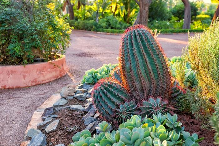 cactus plante, plante exterieur en pot, massifs de plantes dans un jardin publique