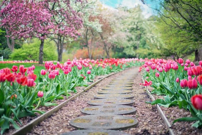 bordure d'allée et parterres de tulipes, allée en dalles rondes, arbres fleuris, gravier pour allée