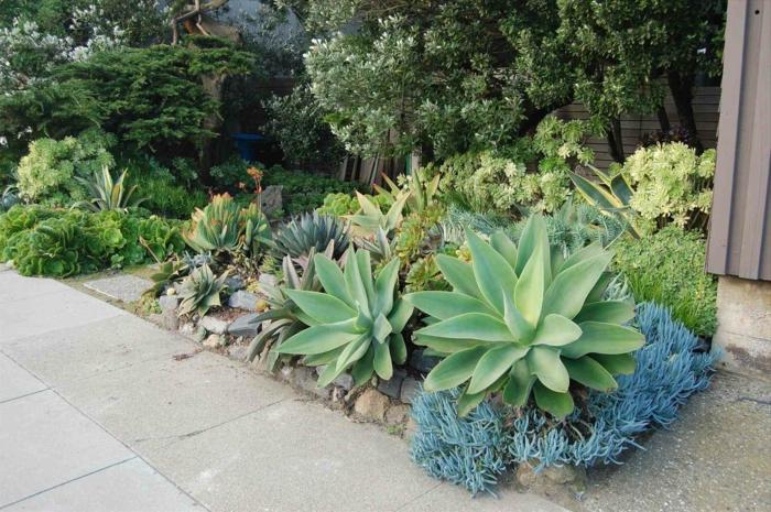 plantes d extérieur pour terrasse, batons de craie bleue, agaves, buissons verts, plantes grasses d extérieur