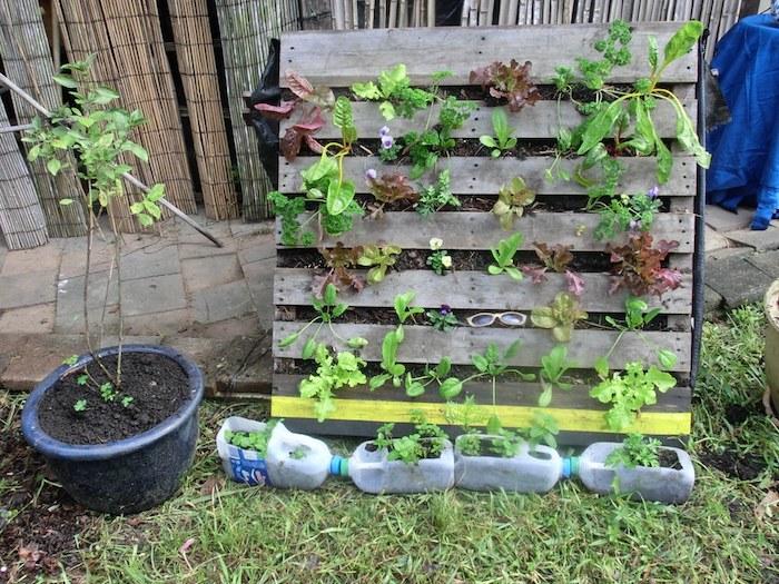 laitues plantées dans une vieille palette recyclée, projet recup de jardin, deco jardin recup avec potager diy