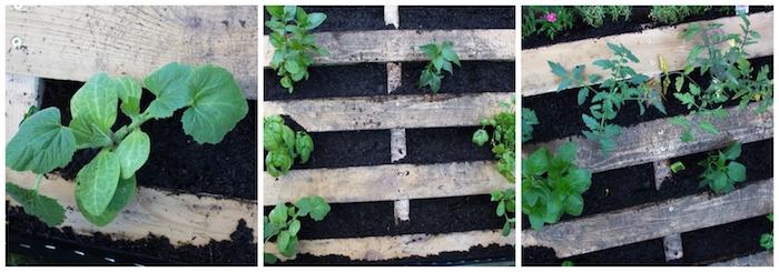 comment planter des légumes dans unе palette de bois, idée que faire avec des palettes