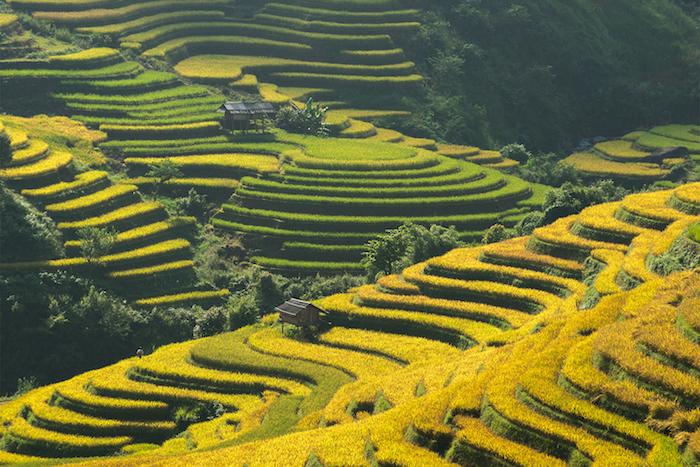Bali les terraces de riz, les plus beaux pays du monde, la beaute de la nature en photo