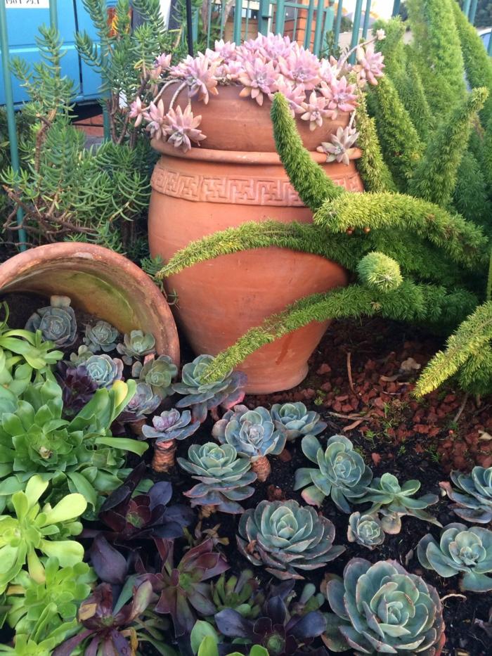 pots argile avec plantes grasses, paillage, rosettes plantes grasses, plante grasse retombante