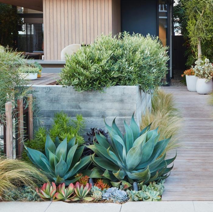 jardin avec plantes succulentes, design de jardin contemporain, allée de jardin, grande jardinière en béton