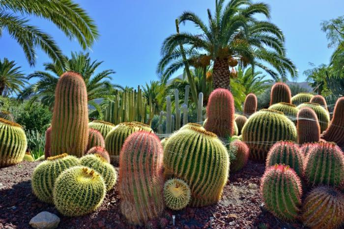 grands cactus dans un jardin botanique, palmiers, plantes grasses, cactus raquette, plantes succulentes d extérieur