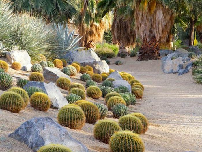 cactée boule, sable et pierres, jardin de plantes grasses exterieur, jardin plantes grasses sous pente