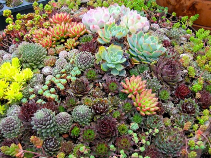 mini arrangement avec plantes succulentes, plante grasse a fleur jaune, joli paysage de succulentes