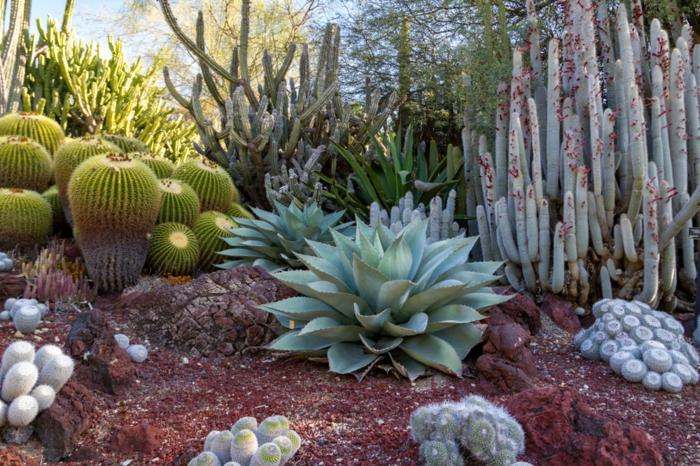 cactus boules, agaves, grands cactus, jardin botanique, design de jardin avec plantes grasses