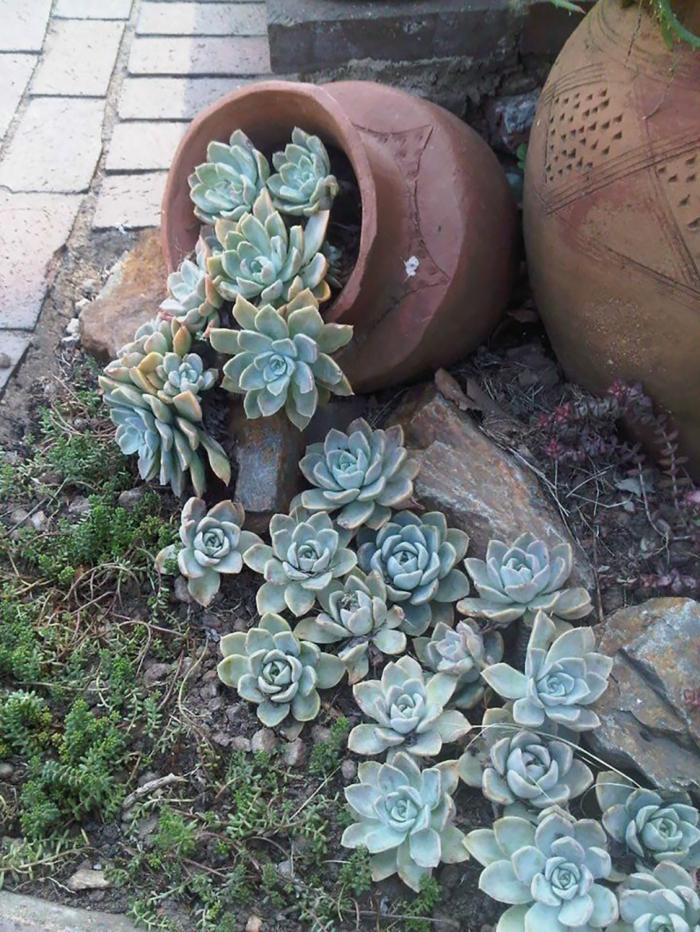 plantes succulentes d extérieur, pots en argile, mini plante grasse, plantes grasses exterieur