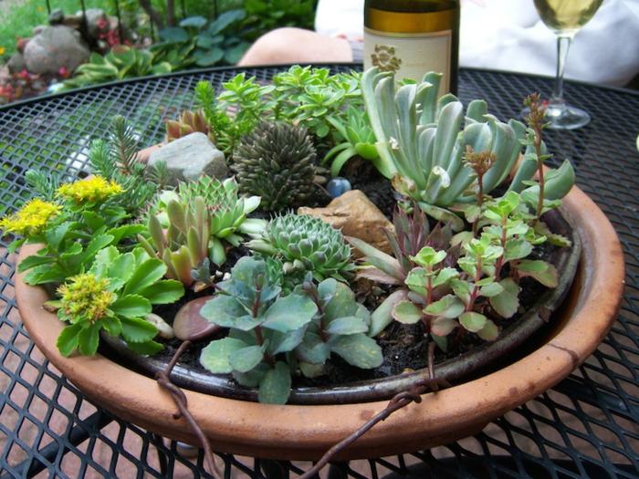 arrangement avec barbecue, pierres et plantes grasses, plante grasse a fleur, bouteille de vin blanc