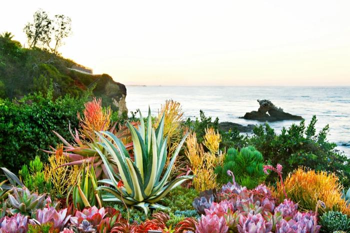 plantes grasses exterieur au bord de la mer, plantes succulentes sur une grande surface
