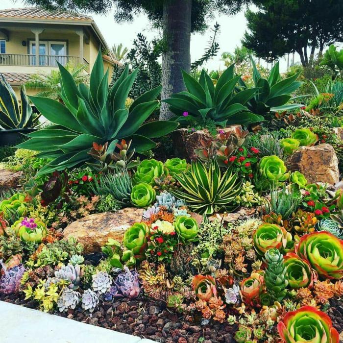 jardin sous pente avec roques et succulentes, agavacées, plusieurs espèces de plantes succulentes d extérieur