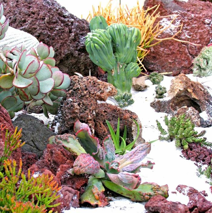 joli jardin paysager, grandes pierres, cactus raquette, sable blanc, arrangement plante de rocaille