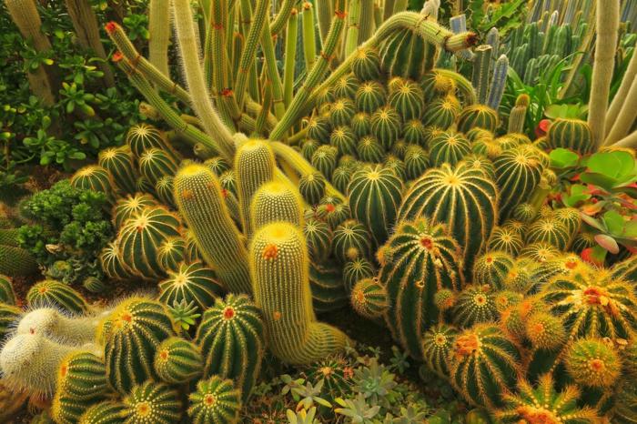 jardin de plantes grasses d'extérieur, cactus géant, plantes succulentes, plantes grasses tapissantes