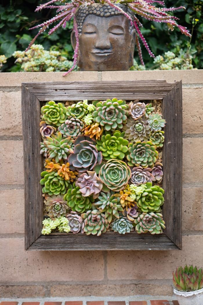 statuette avec les cheveux succulente plante, jardin vertical encadré, plantes succulentes