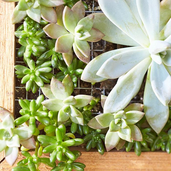 jardin vertical avec un cadre en bois et un grillage, créer un mini jardin avec plantes grasses d extérieur