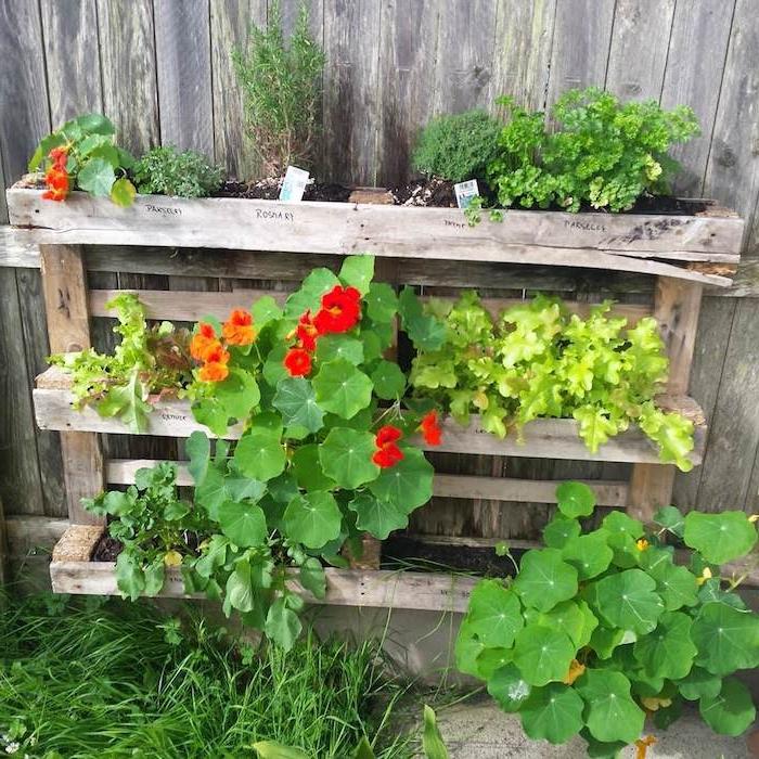 cultiver des herbes fraiches dans une vieille palette recyclée avec des plantes à l intérieur d une palette bois