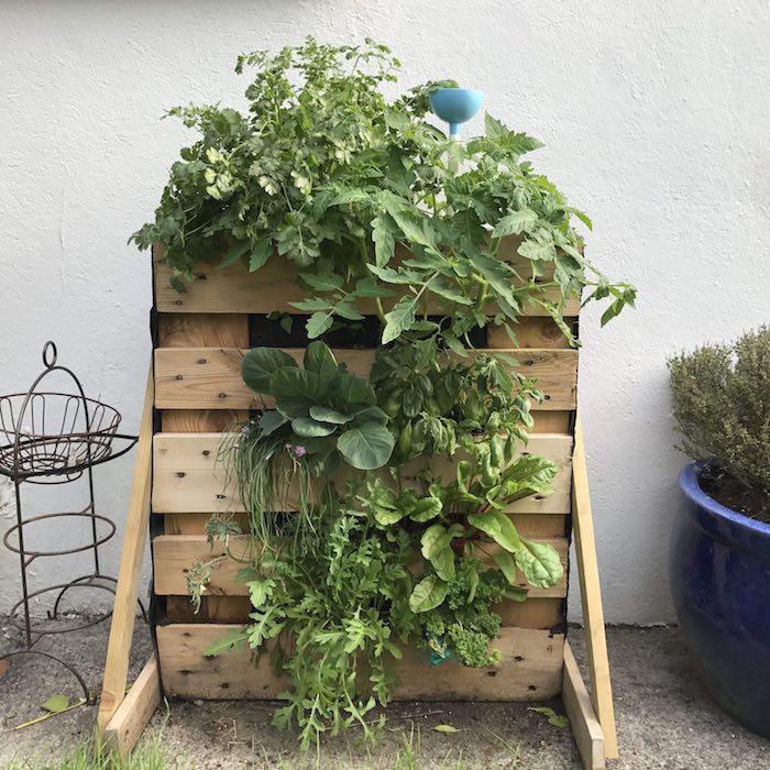 exemple carré potager sur pied a faire soi meme en lattes de bois avec des tomates et autres légumes plantés à l intérieur