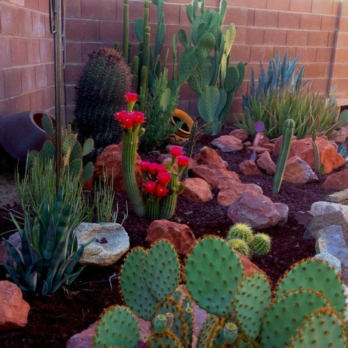 cactus fleuri, plante d extérieur en parterre, plante grasse fleurie, pierres, cactus raquette