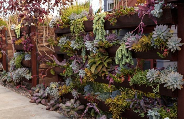 jardinage vertical avec plantes grasses d extérieur, jardin vertical avec palettes, dudleya