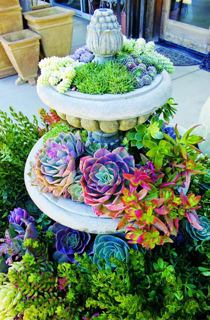 plantes grasses d extérieur, fontaine utilisée comme jardinière avec plantes succulentes, dudleya