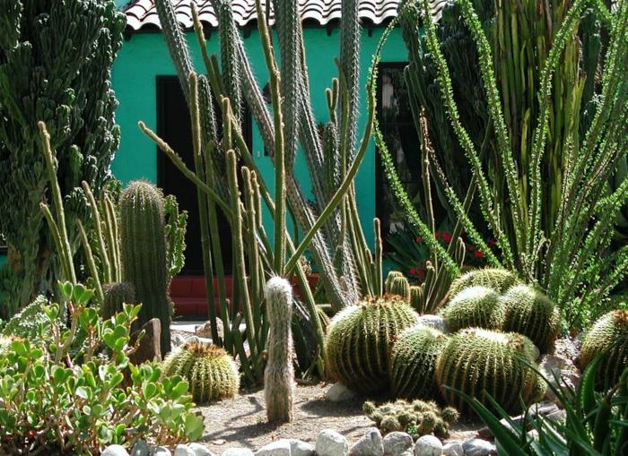 cactées boules, cactus géant, plantes de rocaille, maison verte, joli jardin désertique