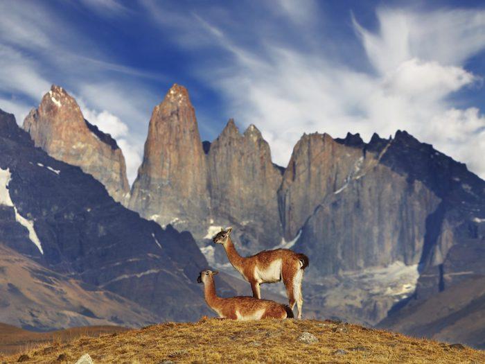 Lama peru montagnes, les plus beaux endroits du monde, images paysages, les plus beaux endroits du monde