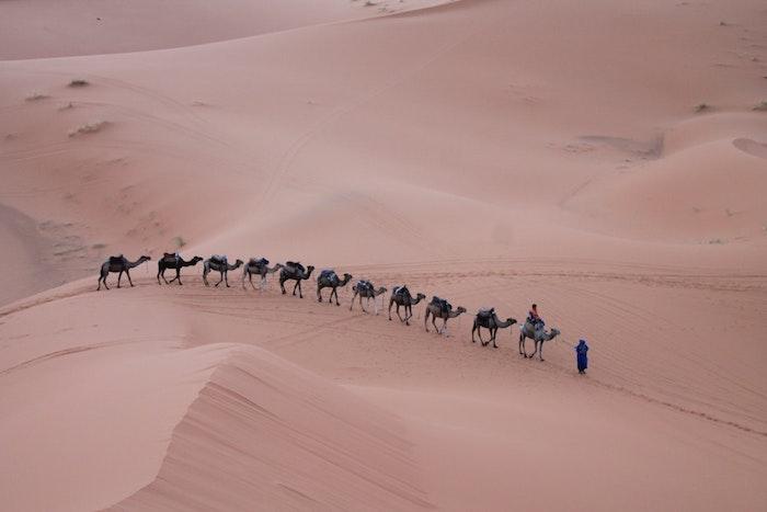 Maroc désert et dromadaires en ligne, le monde paysage magnifique, image de paysage fantastique, les plus beaux paysages du monde