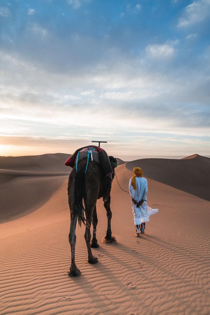 Maroc dromadaire endroit paradisiaque, paysage fantastique, image pour fond d'écran magnifique
