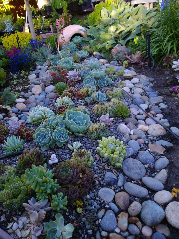 parterre plantes grasses et pierres et galets, grand pot, fleurs bleues et lilas, rocaille originale