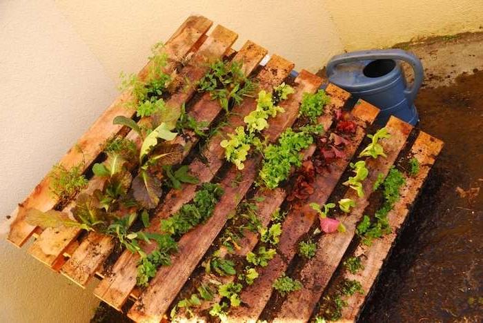 salades vertes et herbes fraiches plantées dans les interstices d une palette de bois a l exterieur