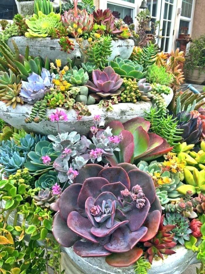 joli jardin de plantes succulentes, plantes grasses arrangés dans une vieille fontaine en pierre