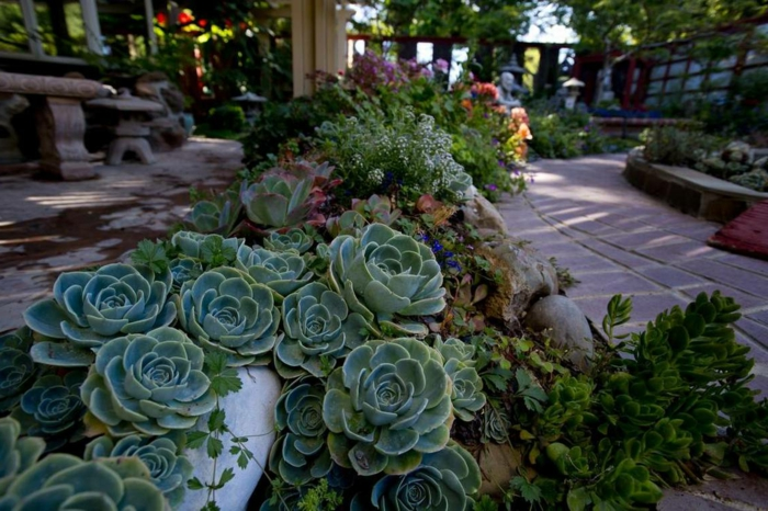 design de jardin de plantes succulentes, allée de jardin et banquettes en pierre, plante grasse retombante