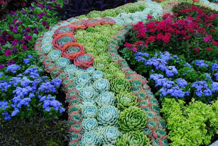 massif de succulentes, succulentes fleuries en rose et bleu, jardin de plante grasse a fleur