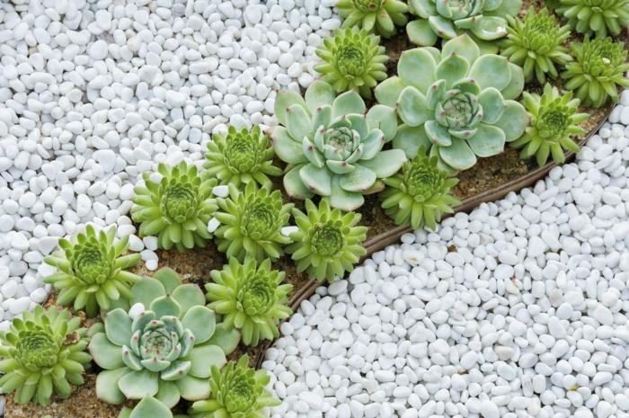 jardin original avec plante succulente, plantes de rocaille et gravier blanc, mini parterre design ondulant