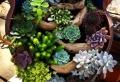 Les plantes grasses d'extérieur – créez un jardin exotique facile à entretenir