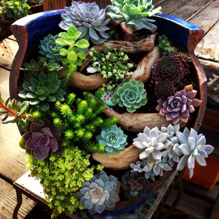 pot cassé avec succulentes en jardin miniature, arrangement plantes grasses et bois flotté